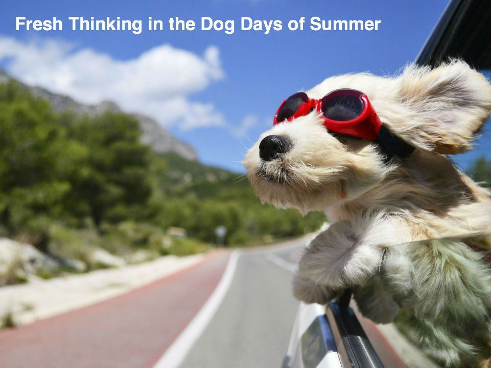 Check The Ppbh Blog During July For Some Fresh And Innovative Ideas To Get You Through The Heat Of Summer Http Www Ppbh Cute Animals Cute Dogs Dog Friends