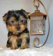 I will own one of these some day!  Sooo stinkin cute
