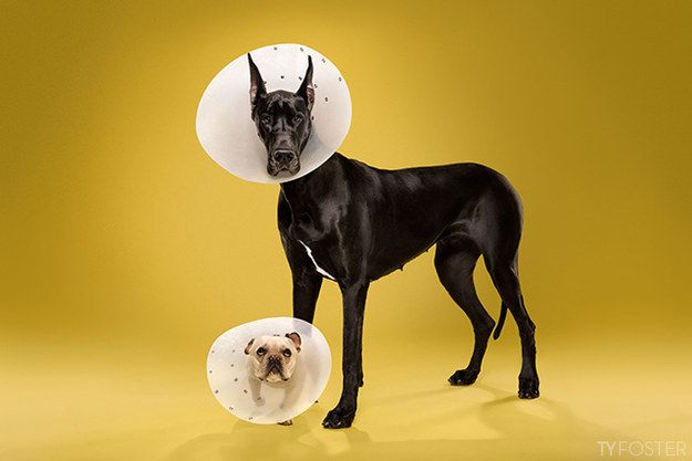 The cone prevents friends from seeing each other