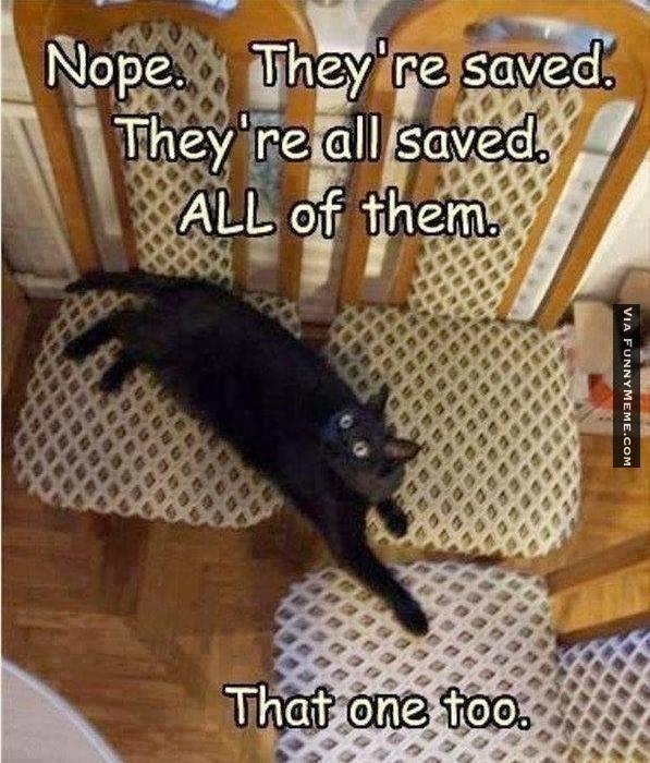 Nope Cat Meme 28 Animals Funny Animals Funny Cats и Cats