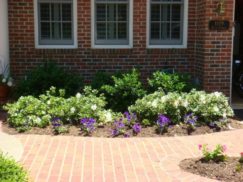 Shrubs For Front Of House Getting Your Ready To Series Plants By Door