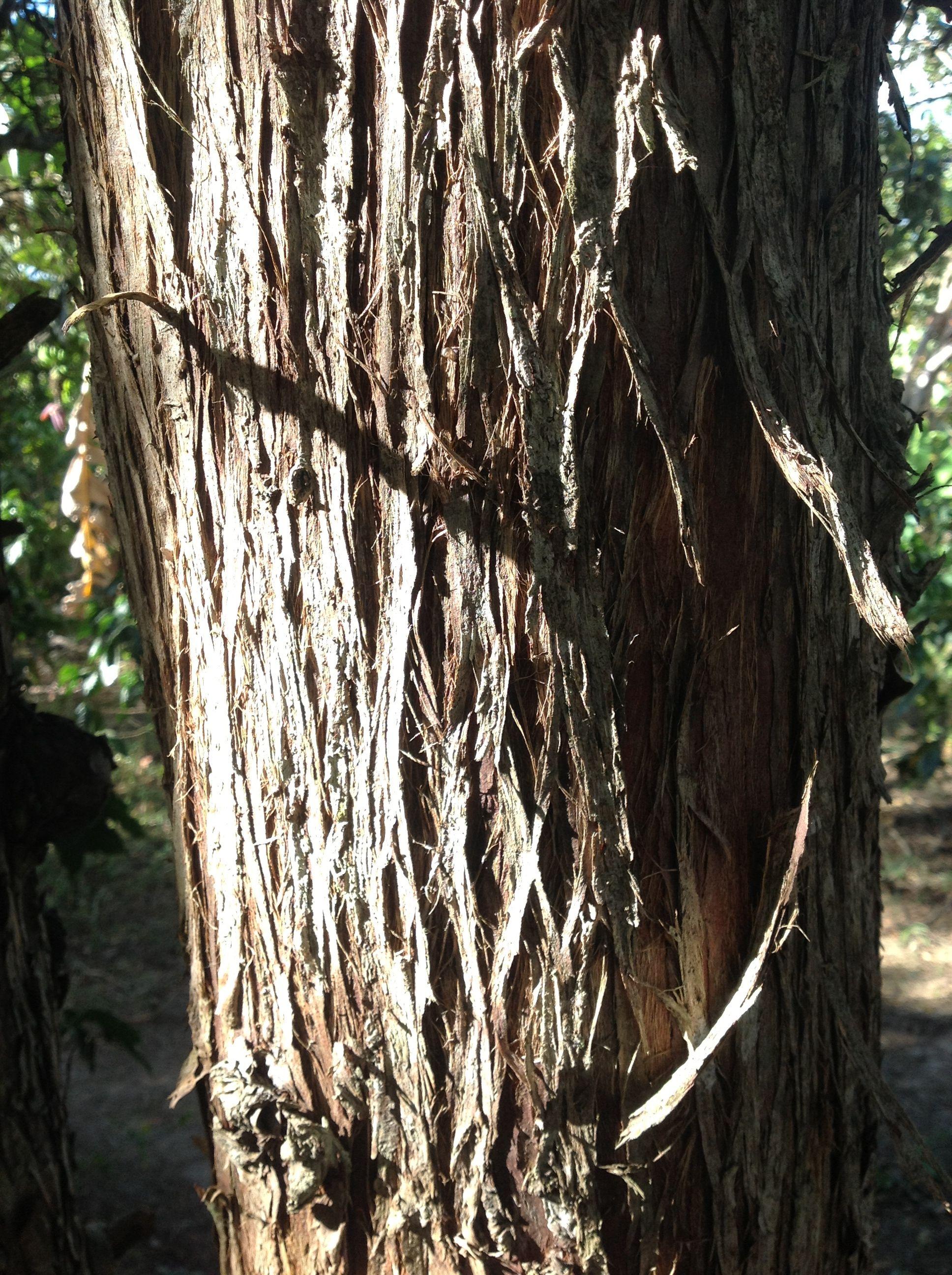 Madera, árbol.