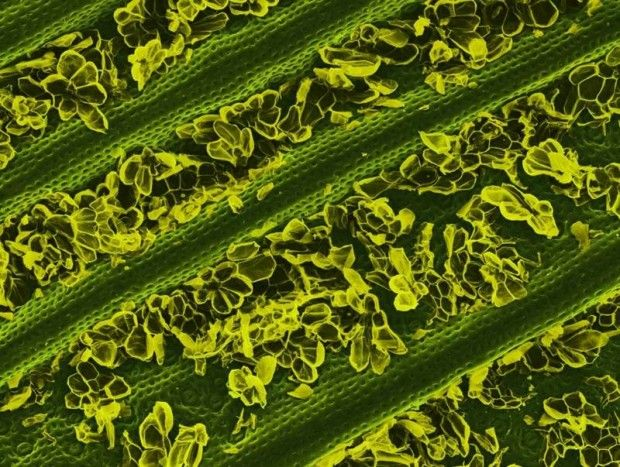 things-under-microscope-19