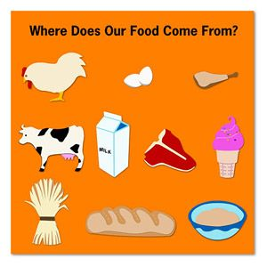Where Does Our Food Come From? | Where Does Food Come From ...