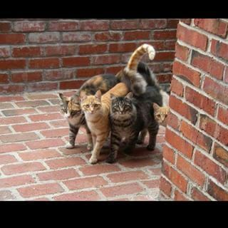When you roll up to a party together: | 21 Animal Pictures That Perfectly Capture Your Squad Goals