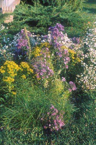 184 Plant Rain Garden For Clay Soil In Full Sun Rain Garden Plants Front Yard Garden Design