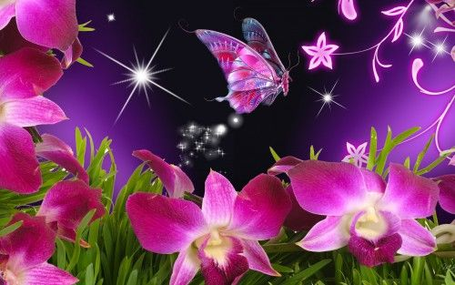 Natural 3d Images For Wallpaper With Butterfly And Flowers 1680x1050 Papel Pintado De Mariposa Orquideas Rosadas Imagenes De Mariposas
