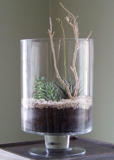 Succulent Terrarium 2
