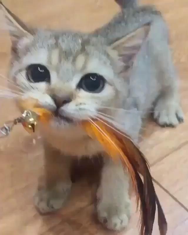 Rosas Hermosas Discover Grrrrrr Grrrrrr In 2020 Baby Katzen Susse Tiere Katzen