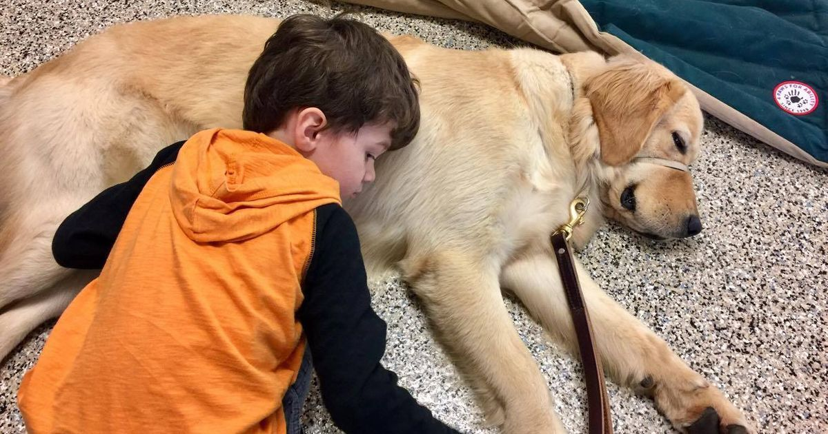 Amazing Moment When Boy Meets His Service Dog News And Notices