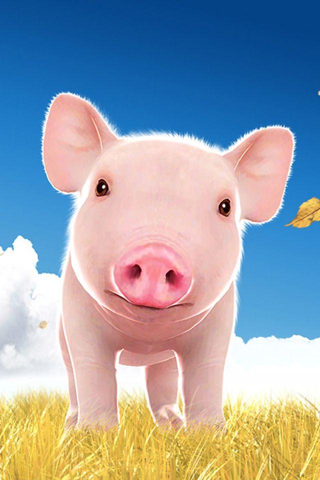 45 Cute Piggy Wallpaper On Wallpapersafari Pig Wallpaper Cute Pigs Pig