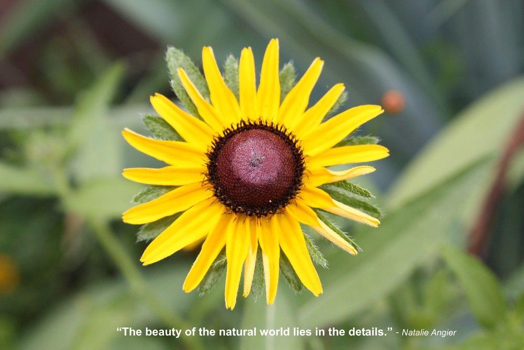 Psychic Resource Tool Tools, Garden, Plants