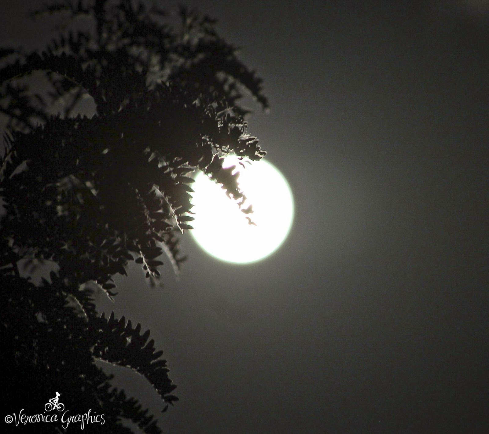 Mommy plus Five: July 12, 2014 - Supermoon.