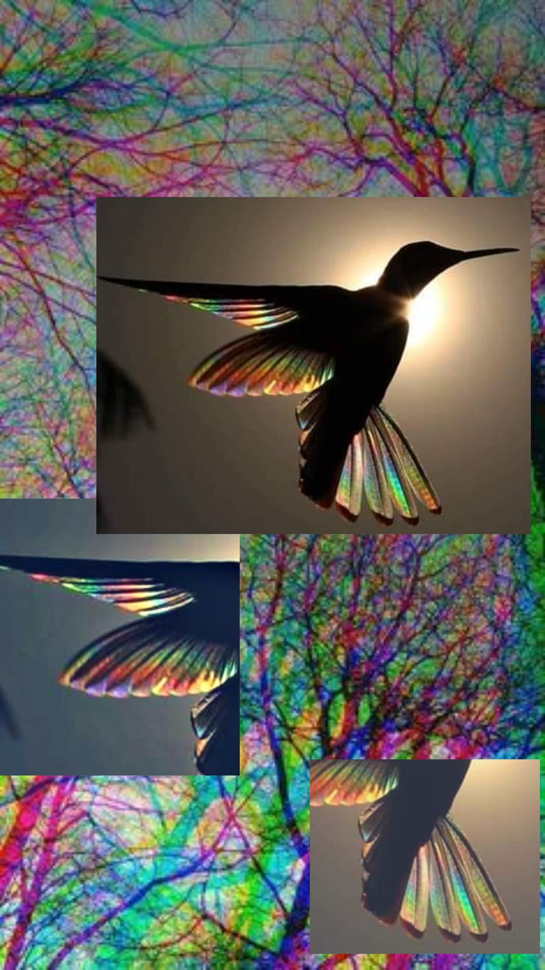 Collage Colibri Psicodelico Fondo Colores Aves Alas Collage