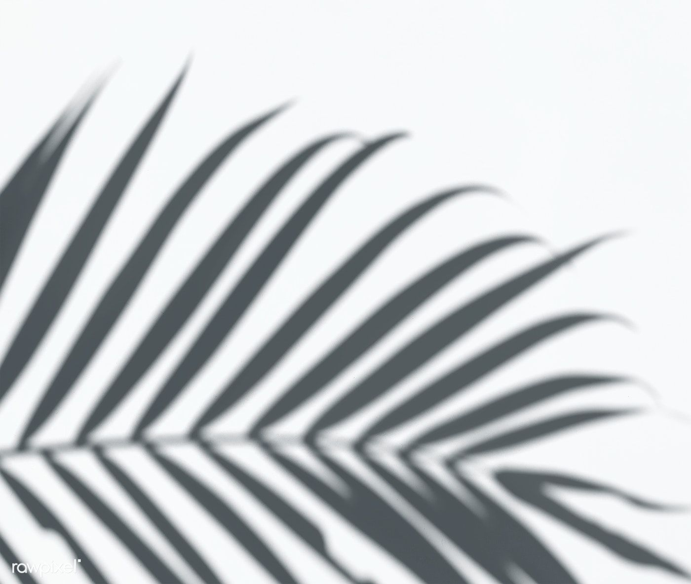 Download Premium Psd Of Shadow Of Palm Leaves On A White Wall 556045 Shadow Plants Palm Leaves Shadow Photography