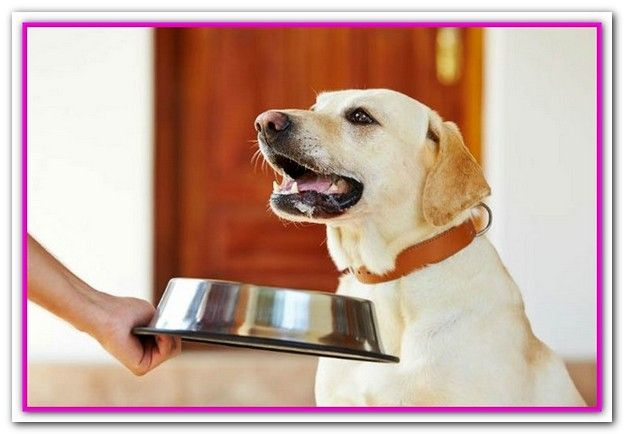 Best Dog Food For Dogs With Sensitive Stomachs Uk Best