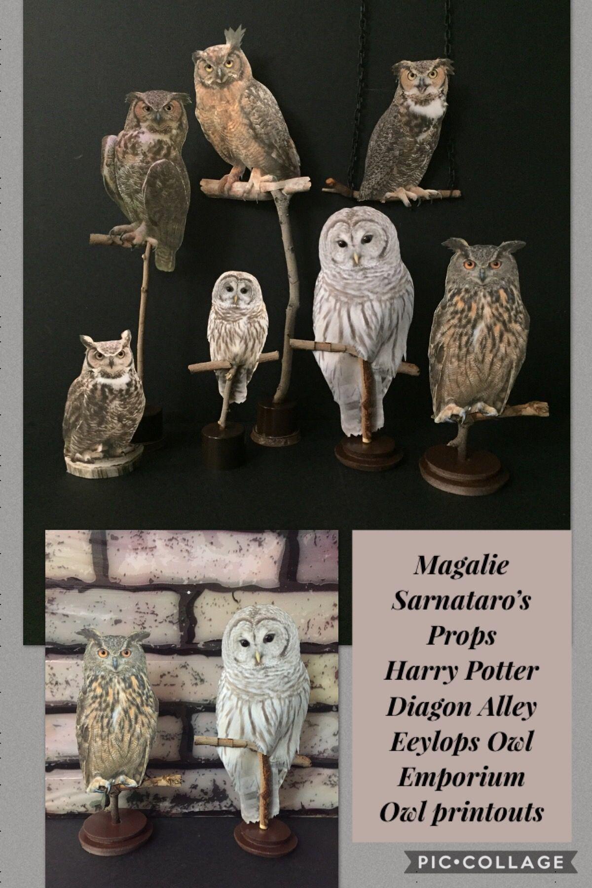 Harry potter stil zimmer magalie sarnatarous props harry potter eeylops owl emporium window