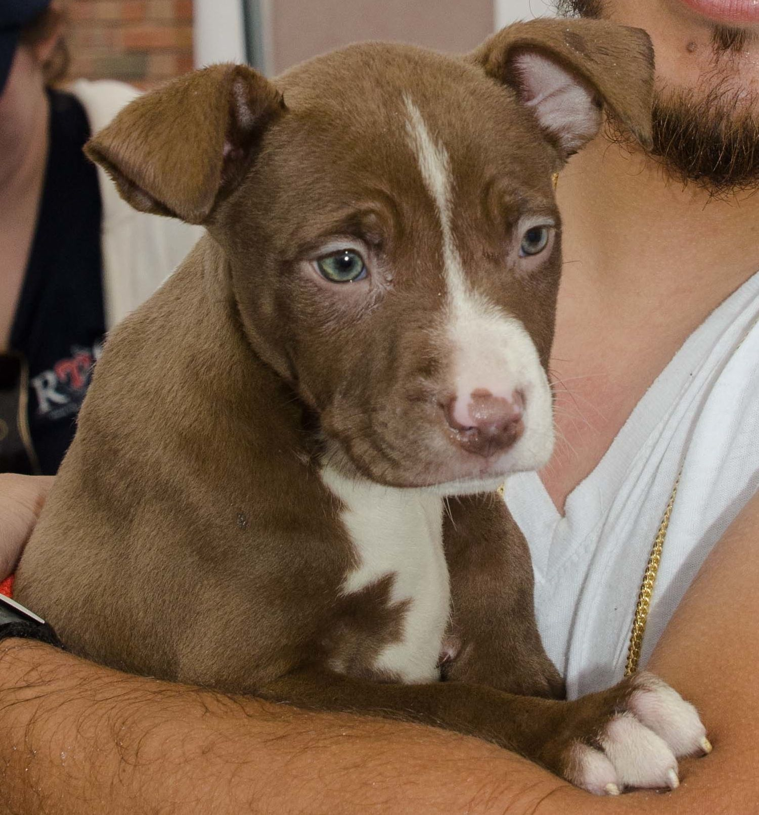 Closeup of this adopted puppy at ridgewood veterinary
