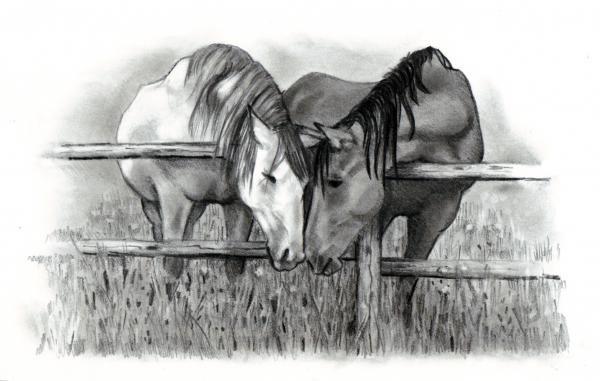 Pencil Drawings of Horses   Pencil Drawings Horse