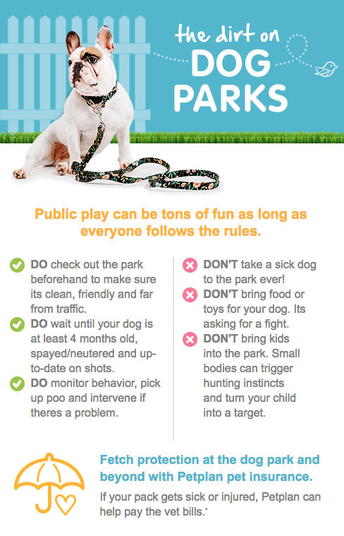 The Dirt On Dog Parks Infographic Dog Park Cat Illnesses