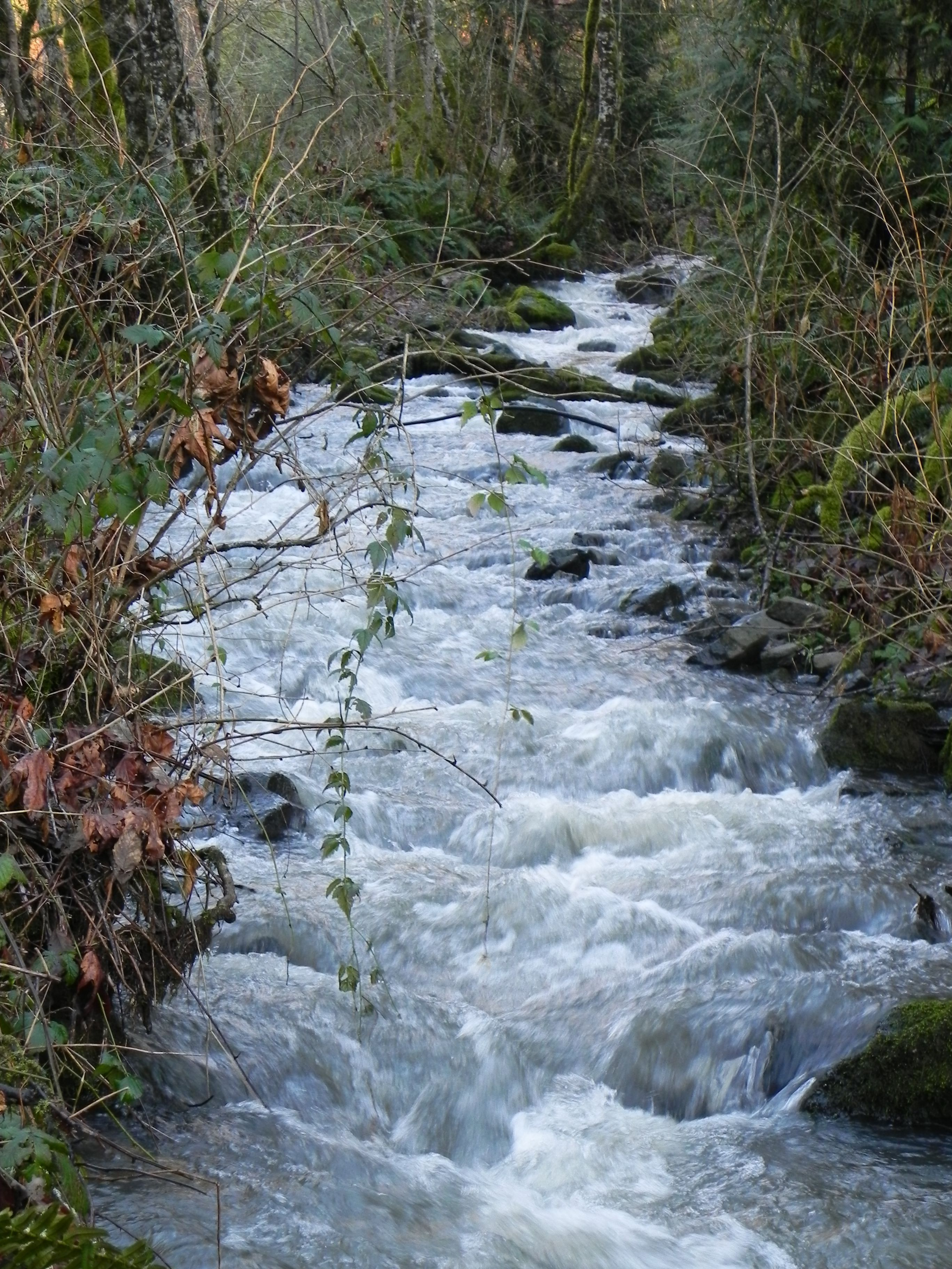 Kalama River Road Wa