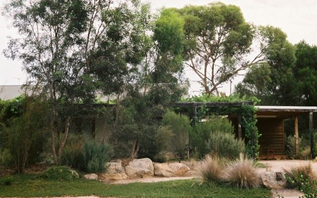pin on australian native gardens