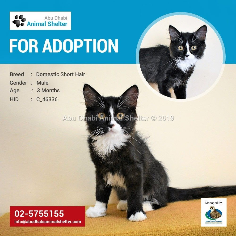 This Pet Was Successfully Homed Feel Free To Visit Our Website To See Other Adorable Pets Looking For Loving Homes Https Animal Shelter Animals Dog List