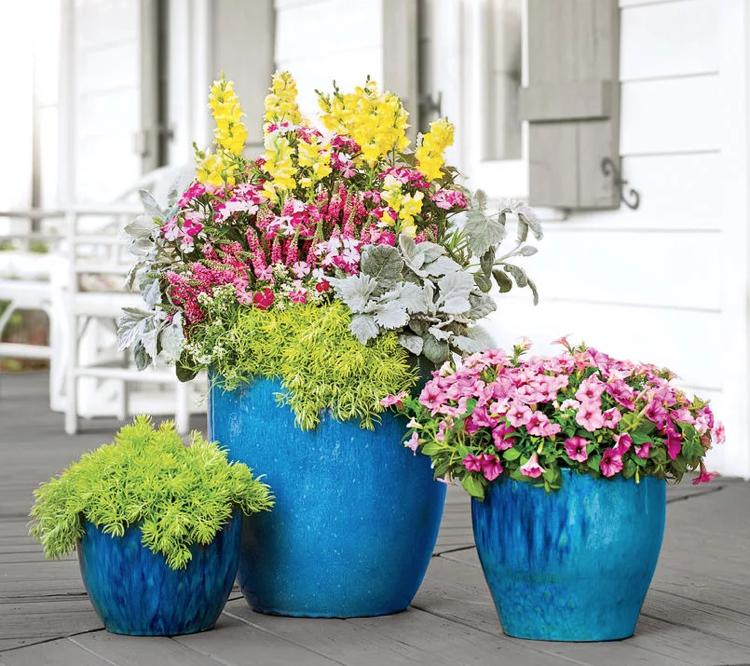 Bepflanzte Blumenkübel große blumenkübel bepflanzen löwenmaul dianthus sedum petunie
