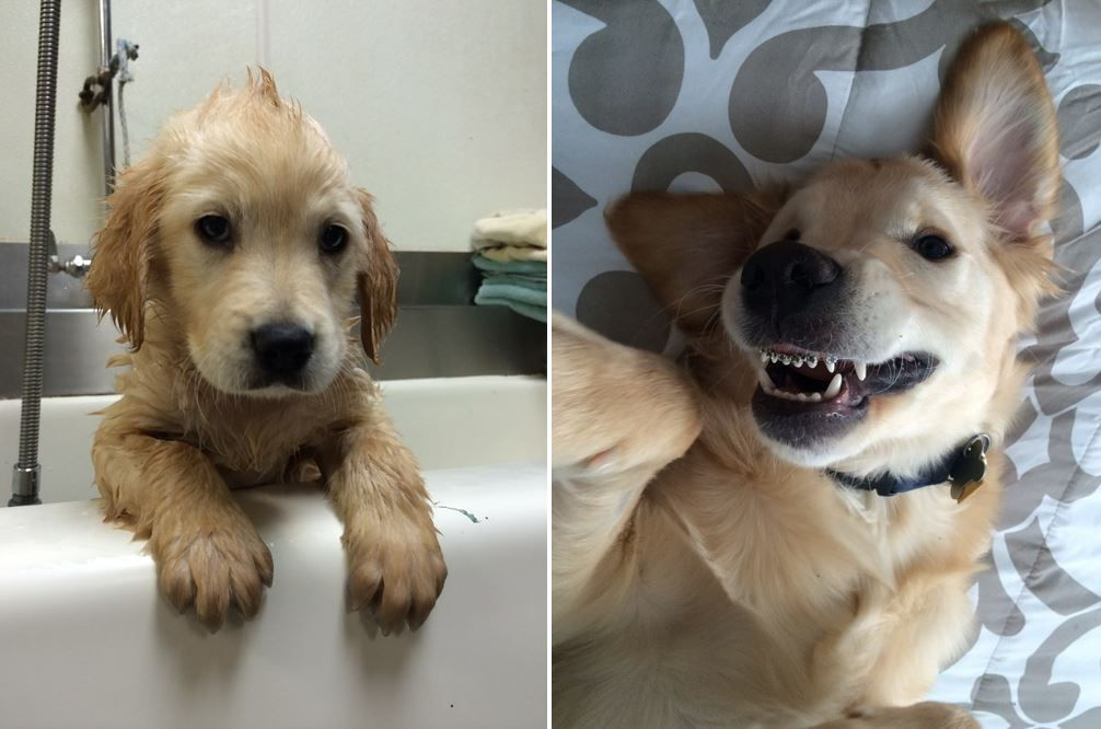 This Puppy Had To Get Braces And People Can T Handle It Dog With