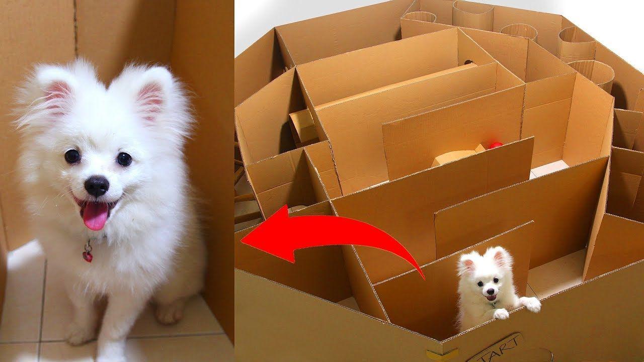 Cute Animals Diy Pet Toys Kittens Playing Pet Toys