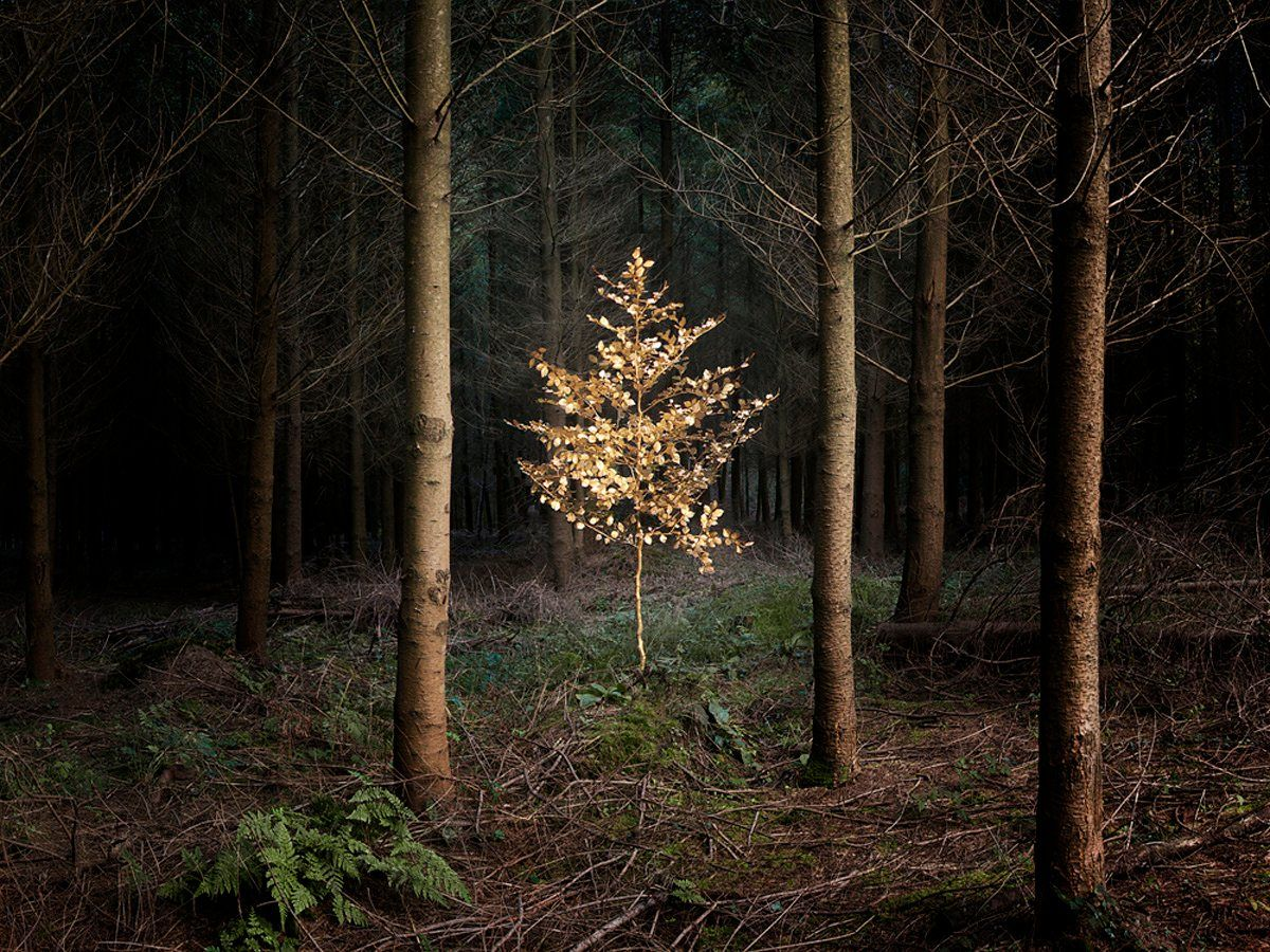 Lovely Dark And Deep Ellie Davies Forest Photography In Pictures Forest Photography Landscape Photography Nature Photography