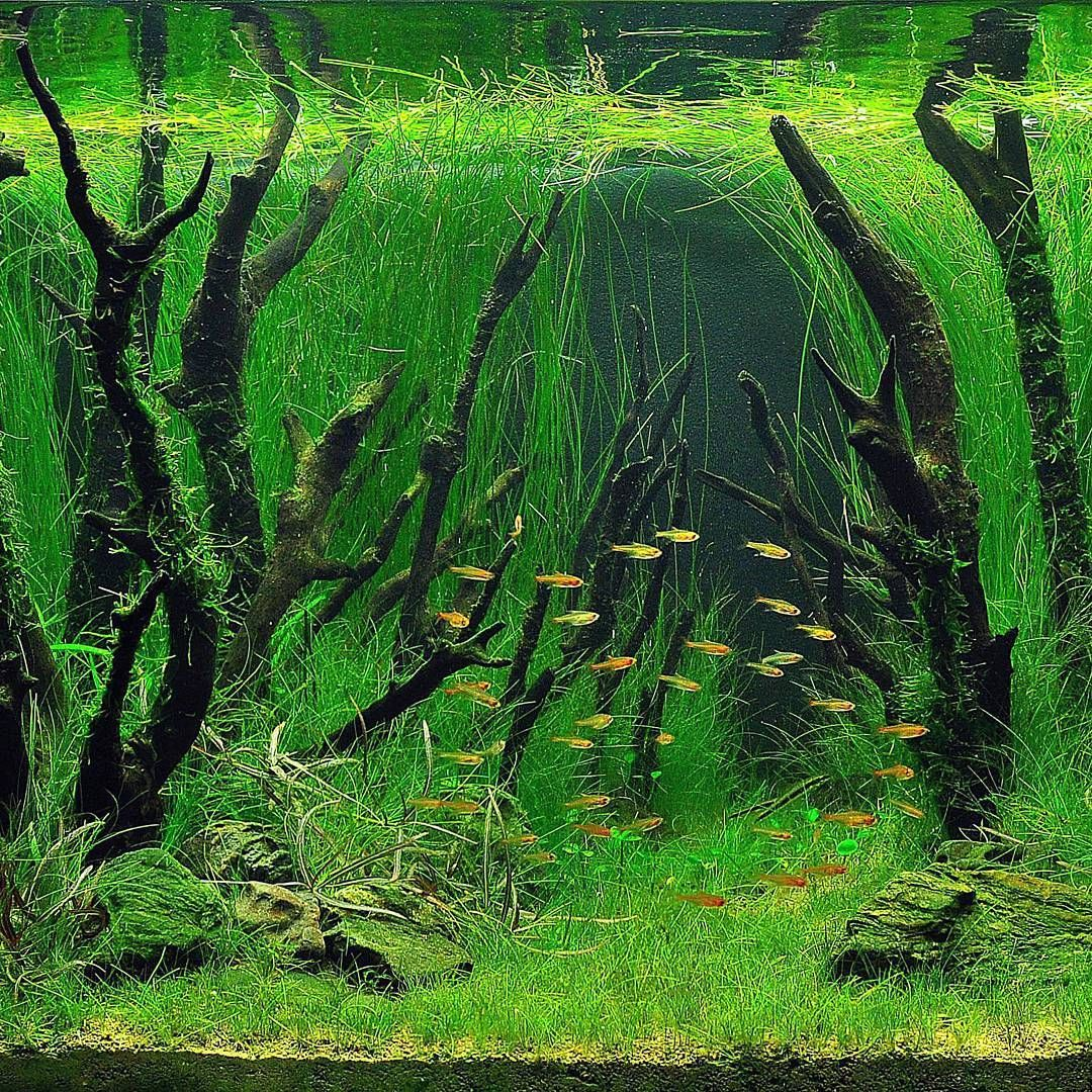 Interesting driftwood placement | Aquarium landscape ...