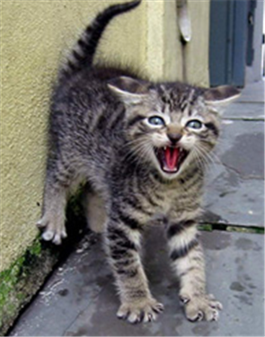 15 Signs That Your Cat Might Be Stressed Cats, Baby cats