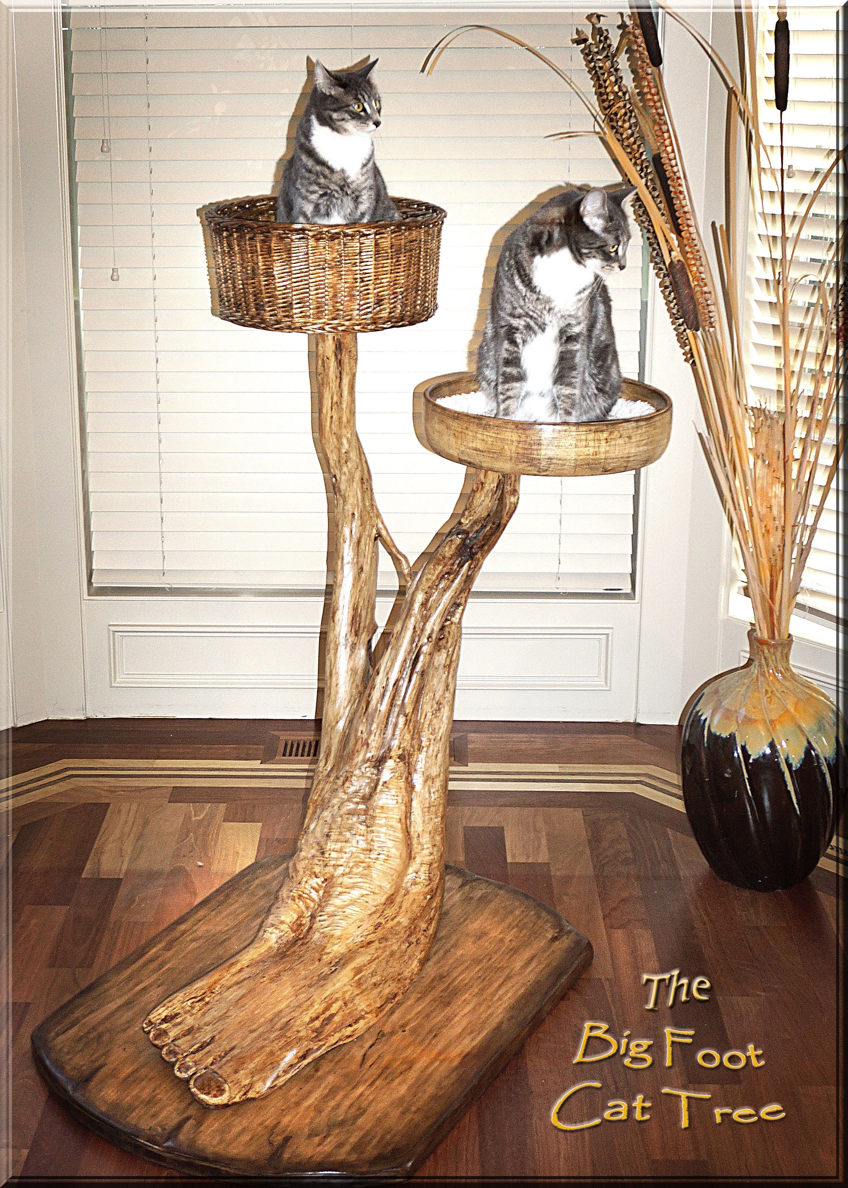 Park Art My WordPress Blog_Kittens For Sale Oregon Eugene