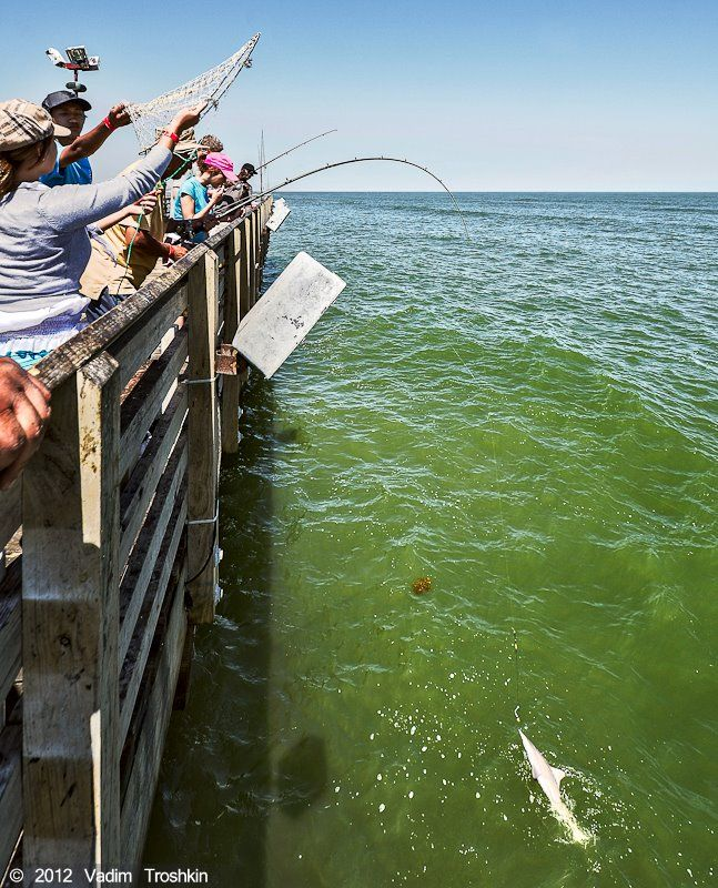 Anglers love to visit the 61st street fishing pier for for Fishing spots in galveston