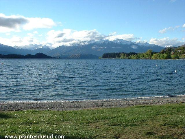 Nouvelle Zélande, le lac de Wanaka. www.plantesdusud.com