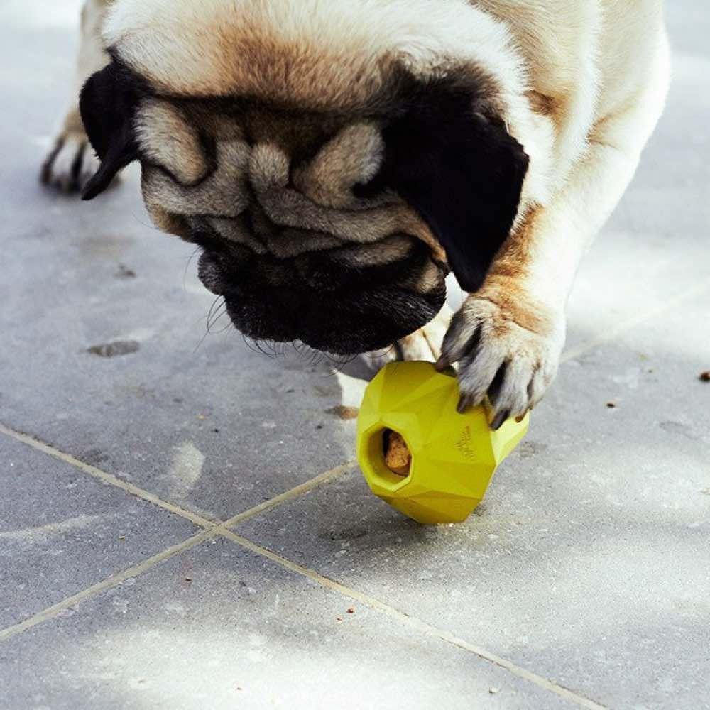 Algunos afortunados peludos ya disfrutan en 🇨🇱 de su nuevo juguete Zee.Dog. Entra en nuestra tienda online para mascotas y elige el modelo que más se adapte a tu perro. Best for Pets