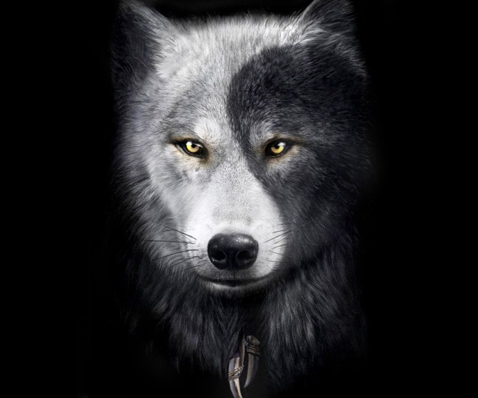 wolves ~ yin and yang   lone wolf   Pinterest   Wolves and Yin and ...