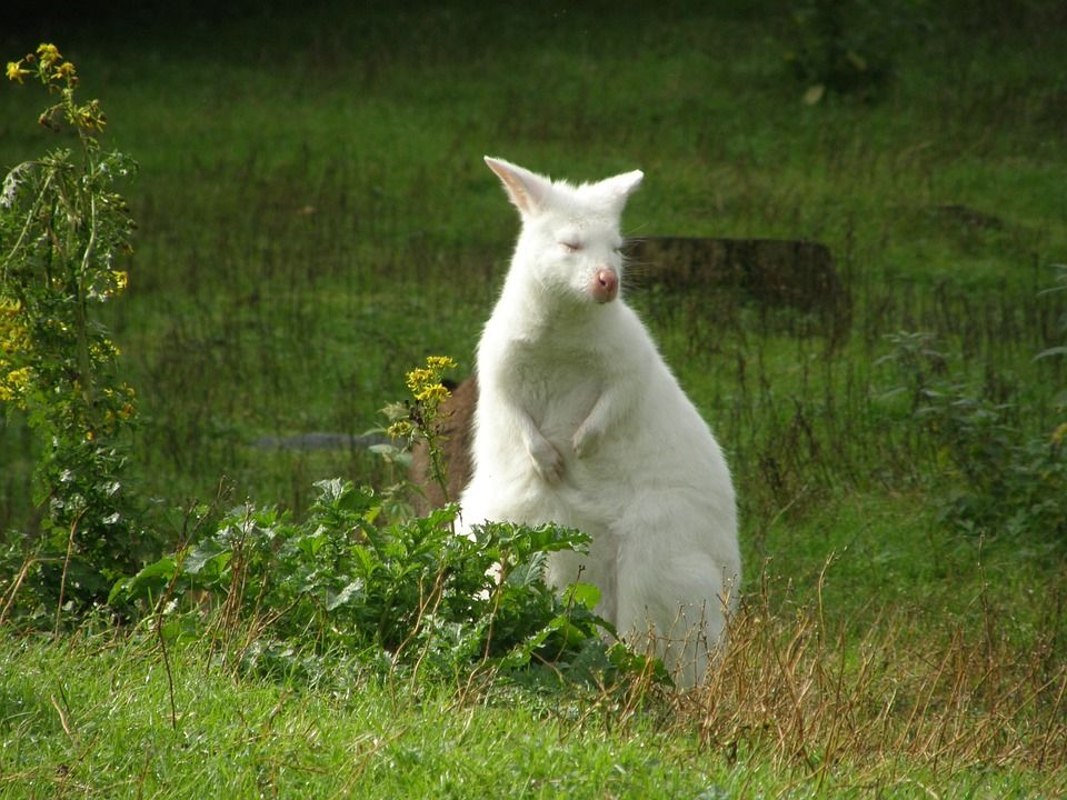 Cute Albino Animals- 20+ Amazing Photos of Beautiful Albino Animals #albinoanimals