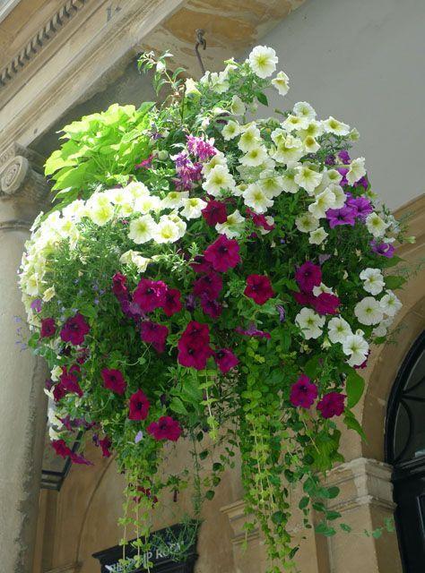 Top Super Hanging Flower Basket Ideas Plants For Hanging Baskets