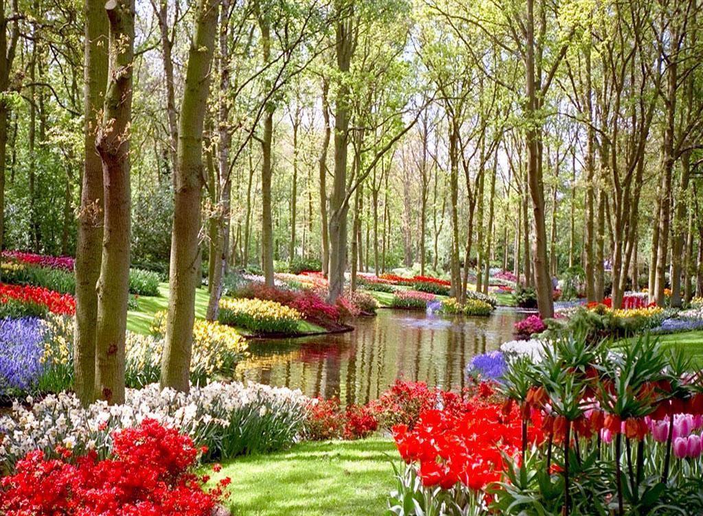 Imagenes+De+Jardines+Con+Flores+Para+Usar+Como+Fondo+De