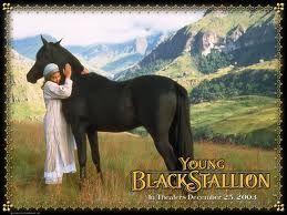 Bildergebnis für black stallion