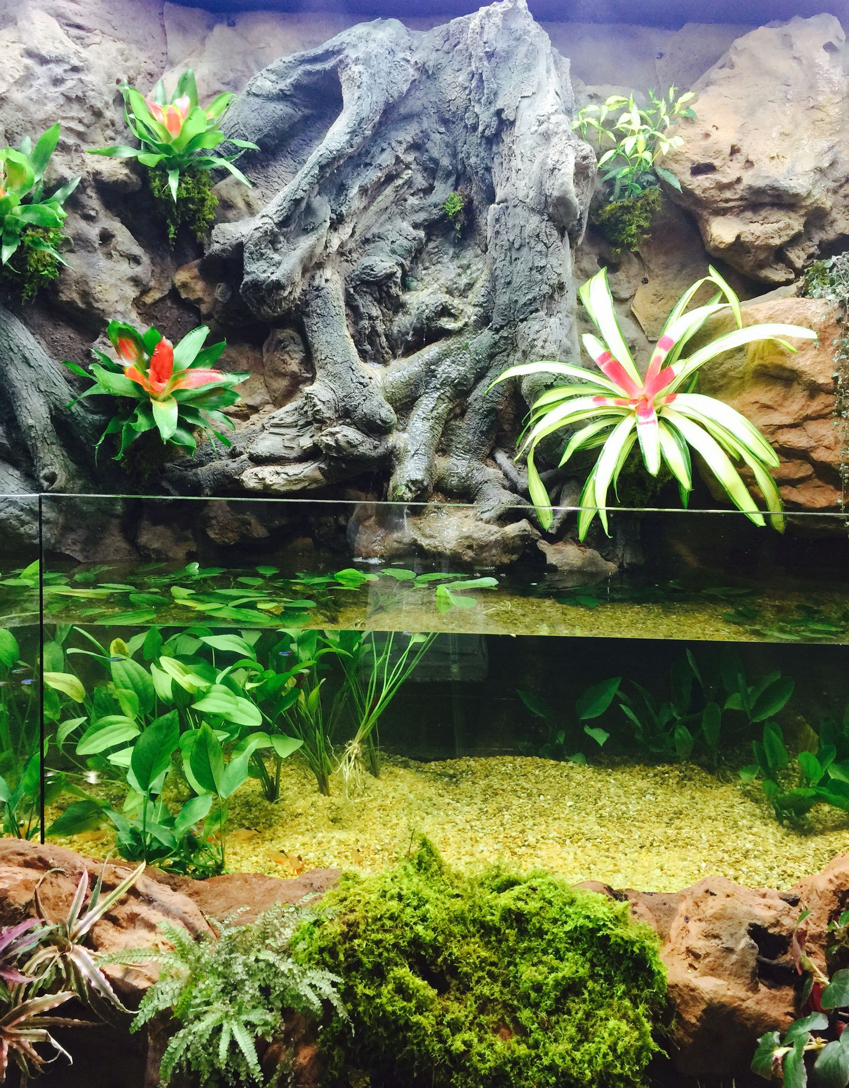 Our Riverbank Tank as seen at The Aquatic Experience Chicago