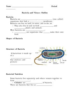 Bacteria and viruses notes outline lesson plan pinterest this 5 page notes outline lesson plan has blanks for student to fill in as the students watch the bacteria and virus powerpoint presentation and as the altavistaventures Image collections