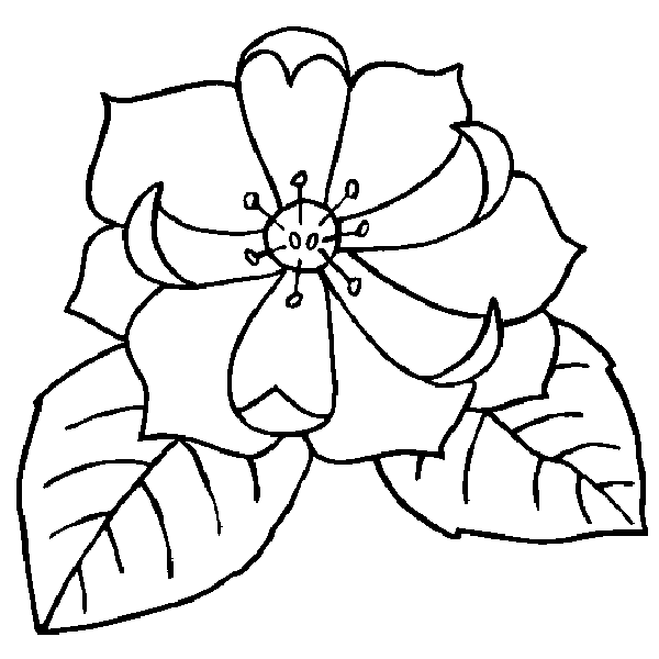 Free Flowers Coloring Pages Color In This Picture Of A Magnolia Or Yoloxochitl And Others With Our Library Online