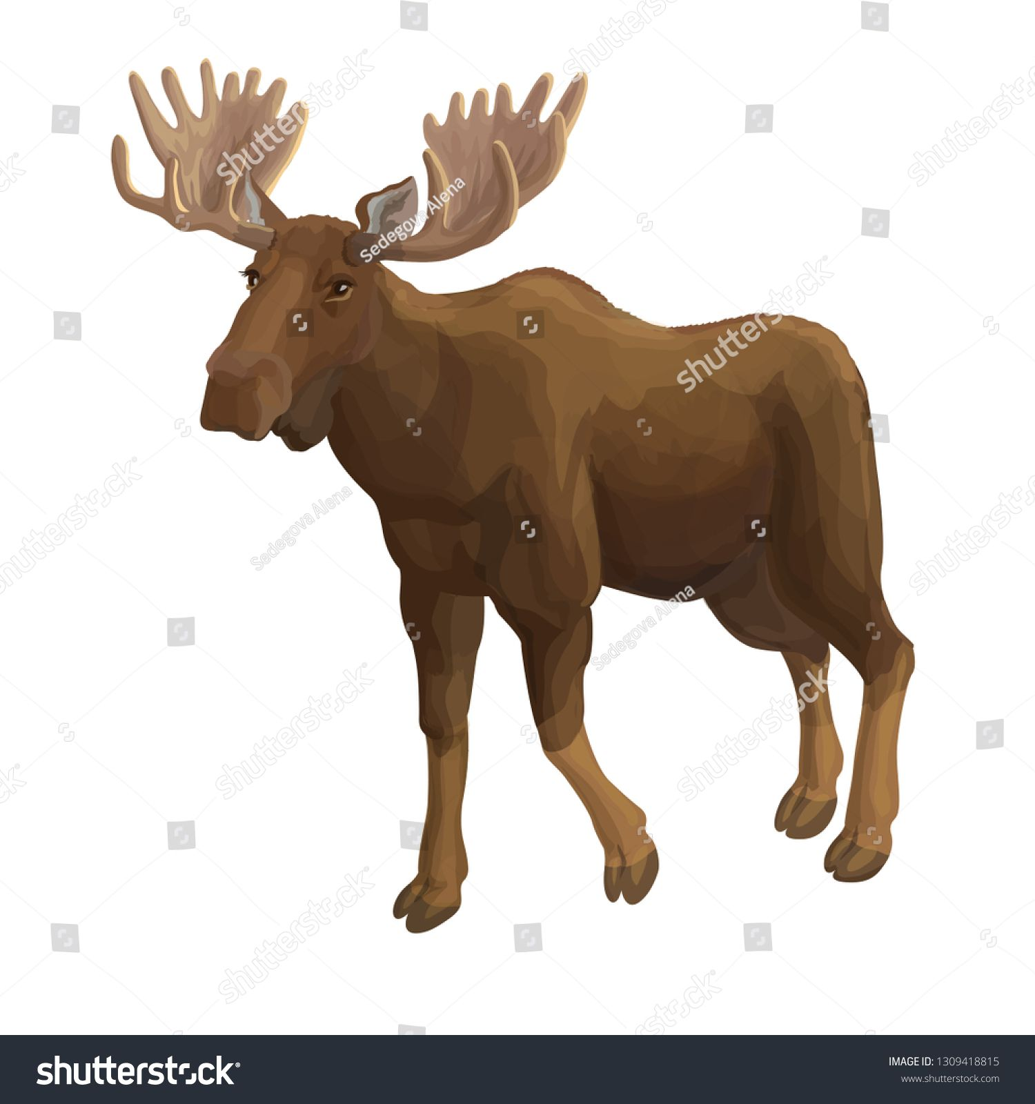 Vector realistic illustration moose isolated on white
