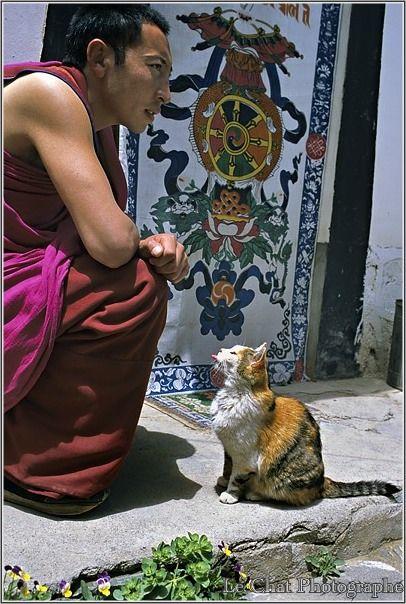 moine tibétain et son chat de profil | Les chats du tibet ...