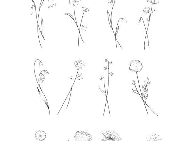 Birth Flower Flash Januar  Schneeglöckchen Februar  Violet March  Daffodil A