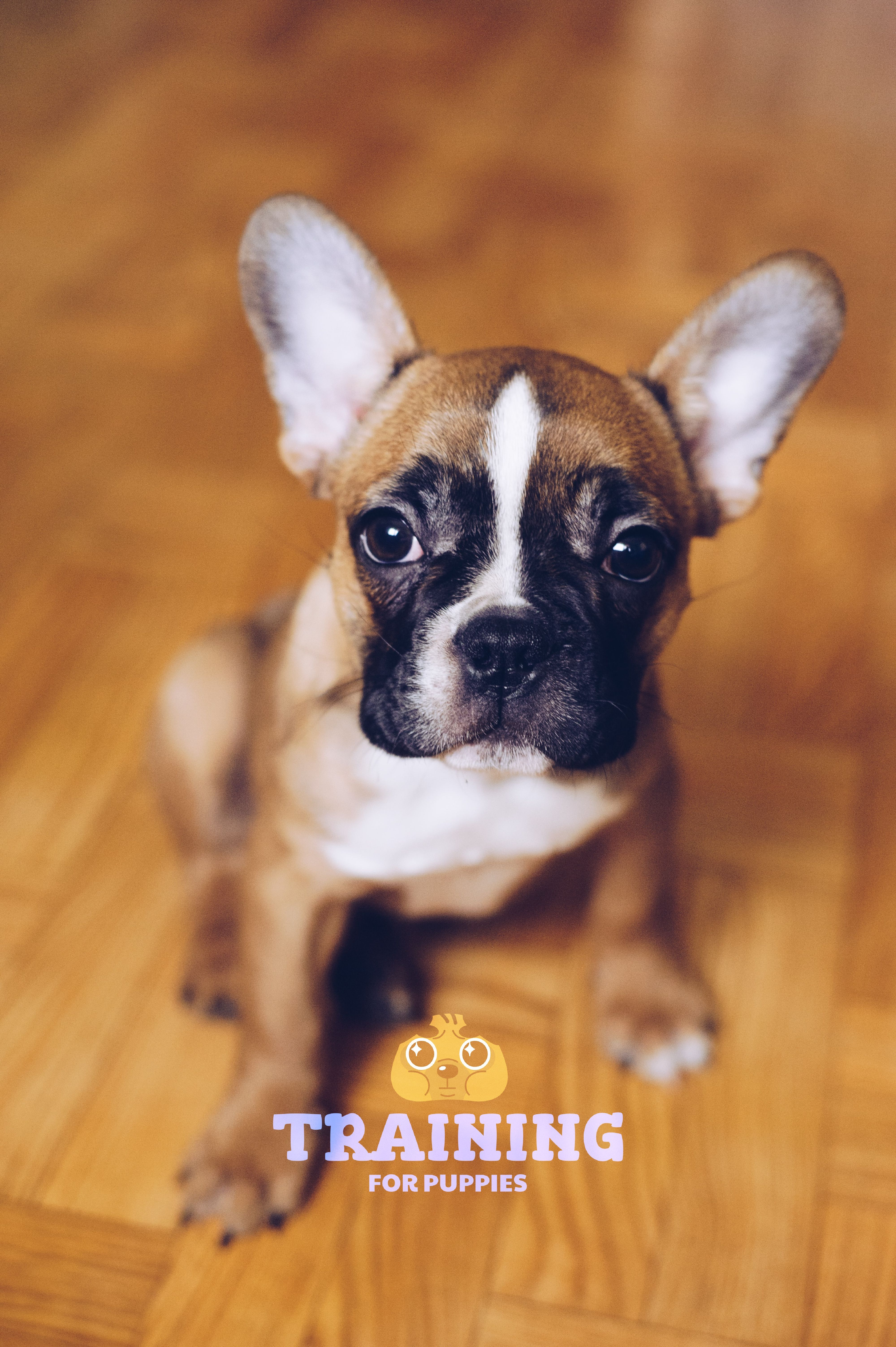 Best food for french bulldog puppy dogs top tips and