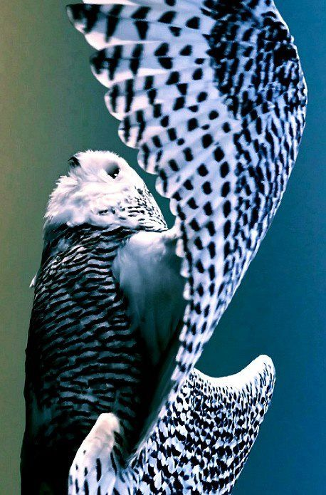 amazing wings